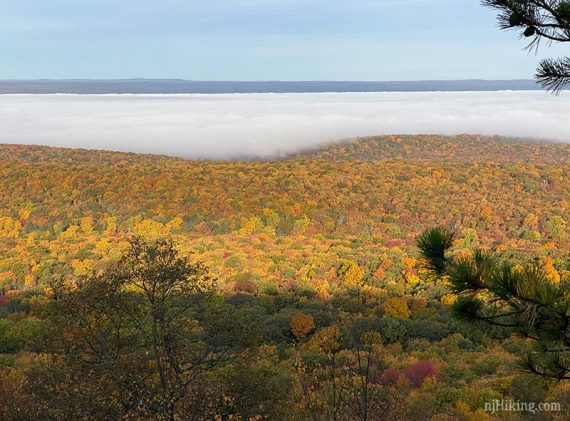 Bright fall foliage with low clouds hanging over