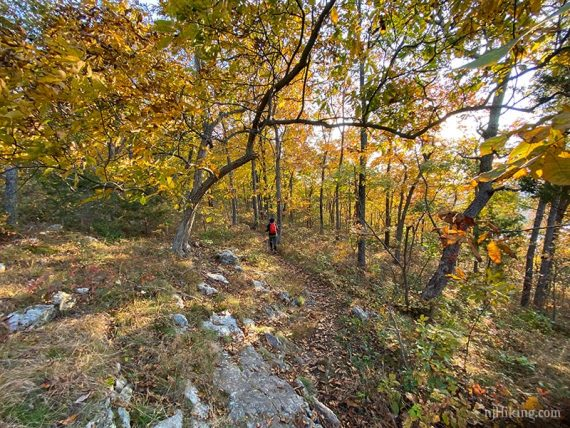 Hiker on a rocky trail surrounded by fall foliage