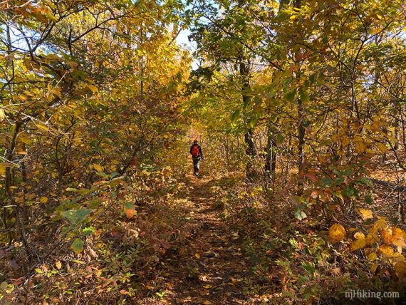 Hiker on a trail surrounded by yellow foliage