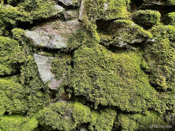 Stone wall covered in thick green moss