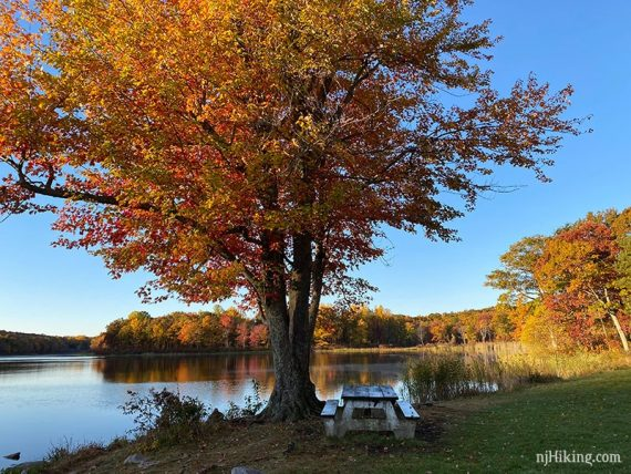 Picnic table near a brightly colored tree and a lake