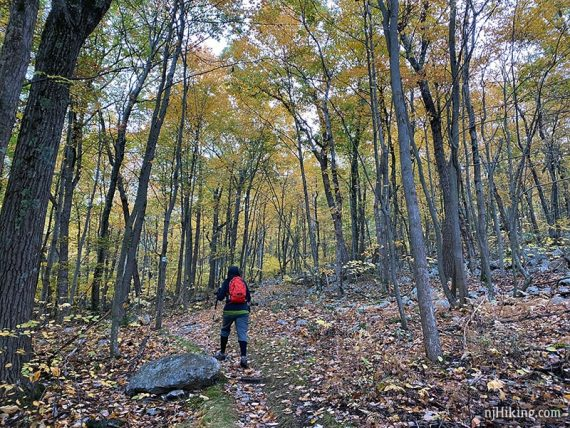 Hiker surrounded by trees with yellow foliage