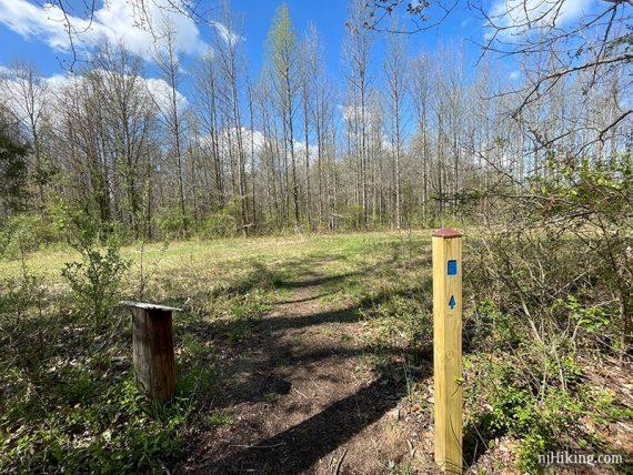 Trail crossing a pipeline cut