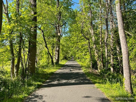 Paved tree lined trail