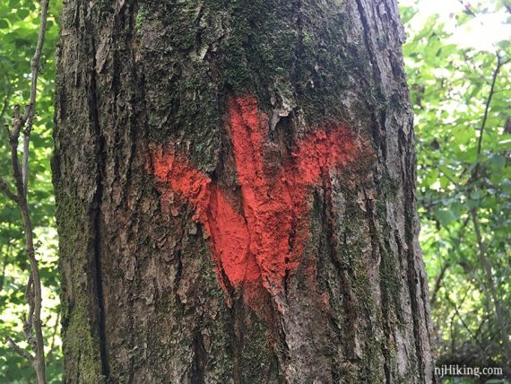 Red 3 pronged marker on tree