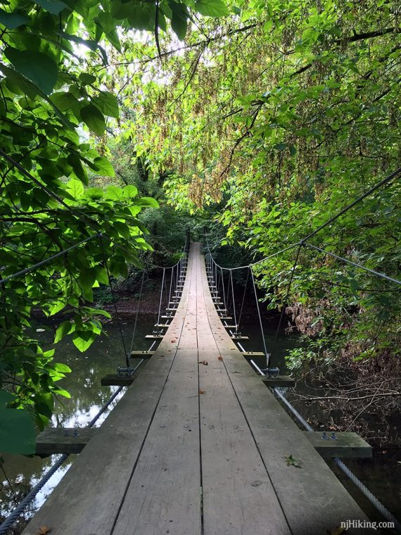 Swinging suspension bridge over a stream with green trees on both sides