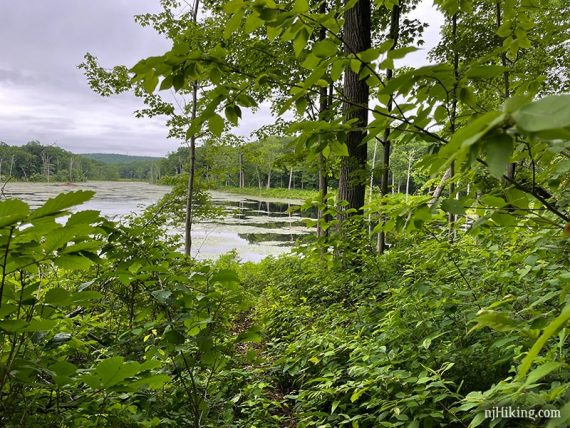 Lost Lake seen beyond an overgrown trail