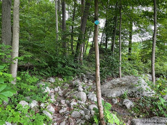Rocky trail with a black dot on teal diamond marker