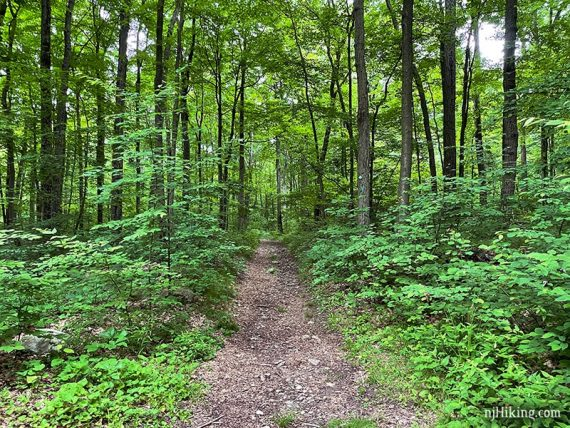 Wide flat trail surrounded by green trees