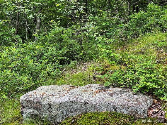 White marker on a tree beyond a large rock.