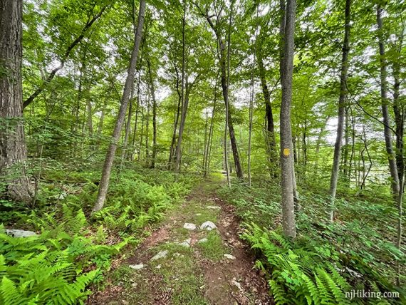 Wide level trail with a yellow marker on the tree