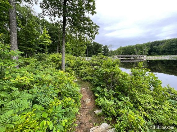 Trail with green foliage on the side next to a pond with a bridge in the distance