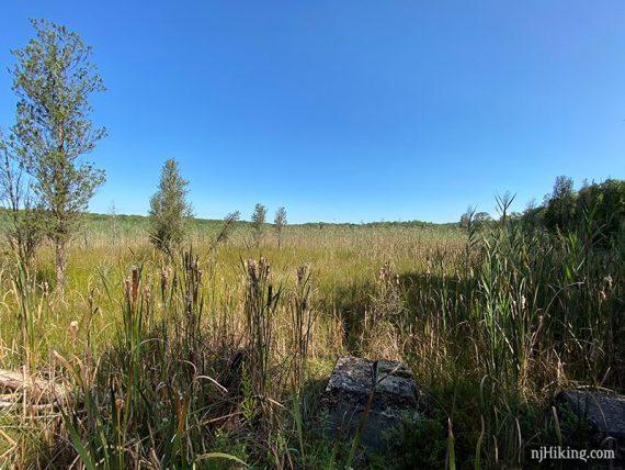Open marshy area