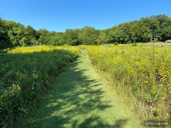 Mowed trail through a field of wildflowers