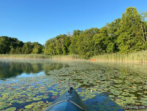 Kayak in lily pads on a lake