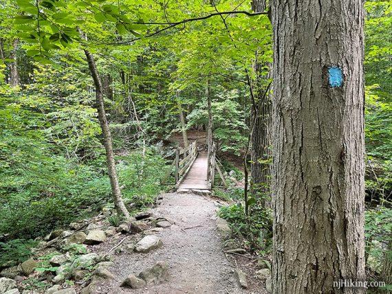 Blue blaze on a tree and a trail footbridge