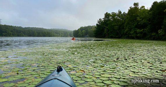Kayaker on a lily-pad covered Lake Aeroflex.
