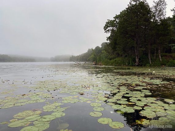 Lily pads on a foggy lake
