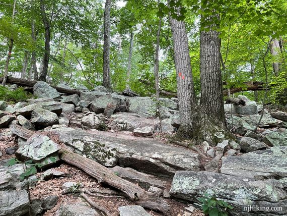 Orange trail markers on a rocky trail