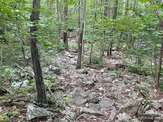 Rocky trail with orange marker on a tree