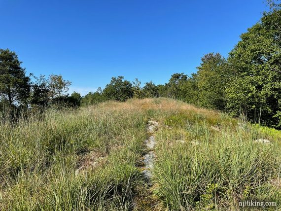 Narrow trail with grass