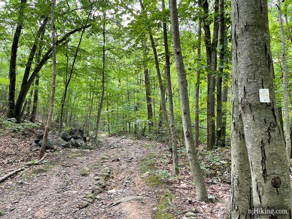 White blaze on a tree near a trail