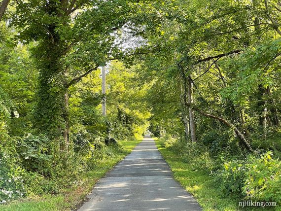 Paved rail trail with shady trees on either side
