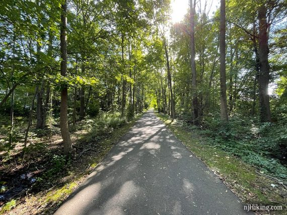 Paved rail trail surrounded by tall trees