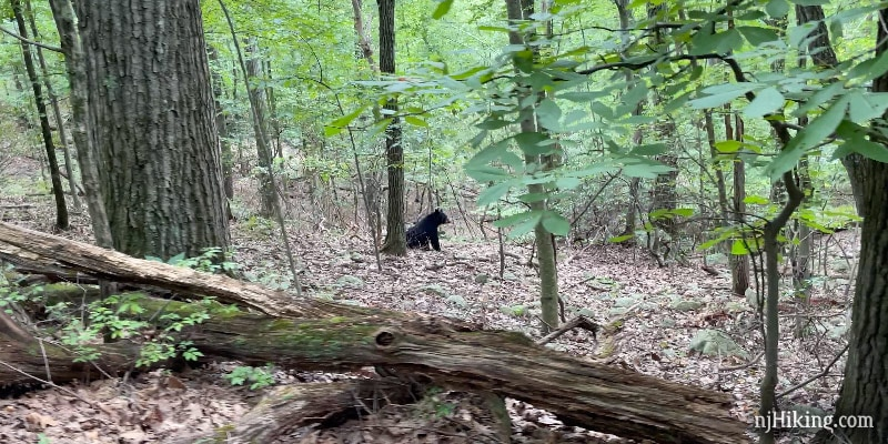 Bear sitting in the forest