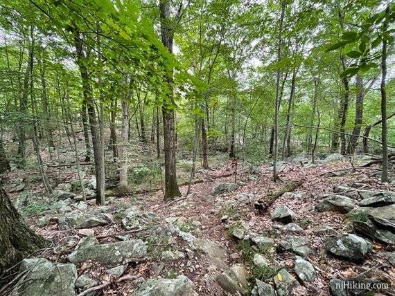 Very rocky trail in a forest