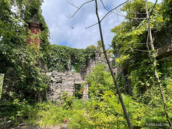 Vegetation covering the stone walls of the castle