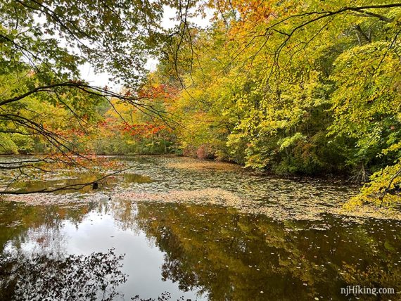 Fall foliage at Glasmere Pond